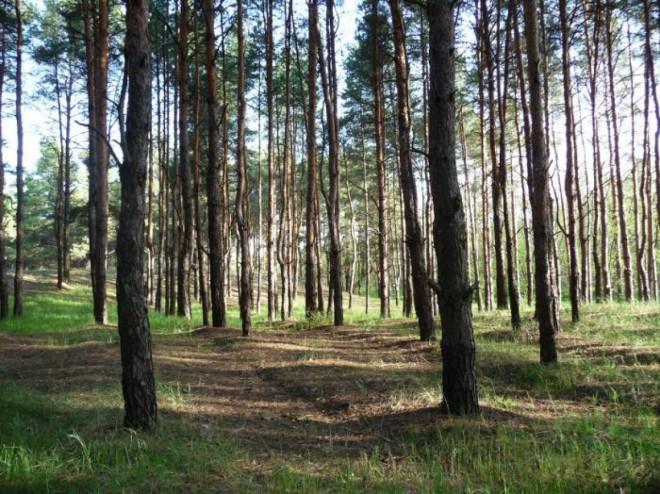 Лісові землі оподатковуються земельним податком